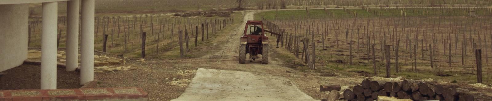 Саук-Дере виноградники осенью