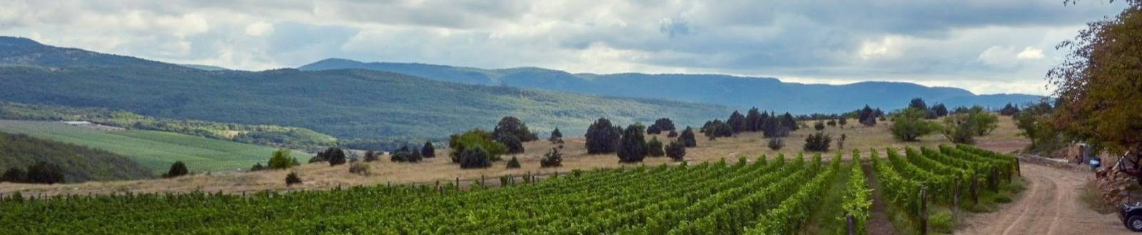 Виноградники Uppa